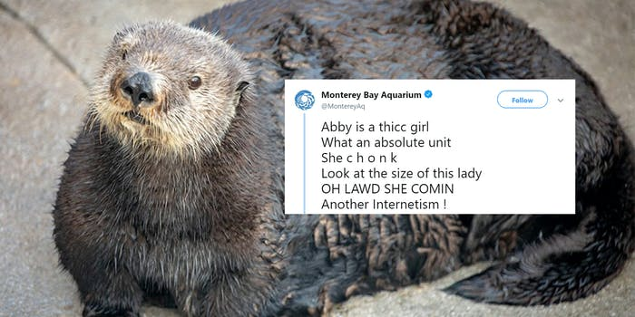 abby monterey bay aquarium tweet
