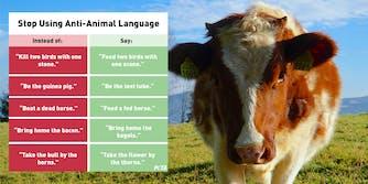 peta anti animal language cow