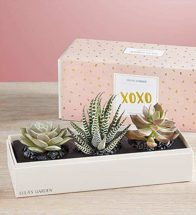 xoxo succulents lulas garden