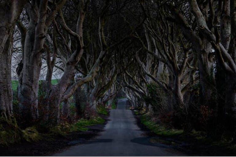 Where is Game of Thrones filmed - Dark Hedges