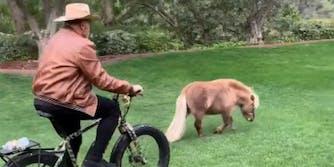 arnold scwarzenegger mini pony tiktok