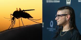 Skrillex fights mosquitoes