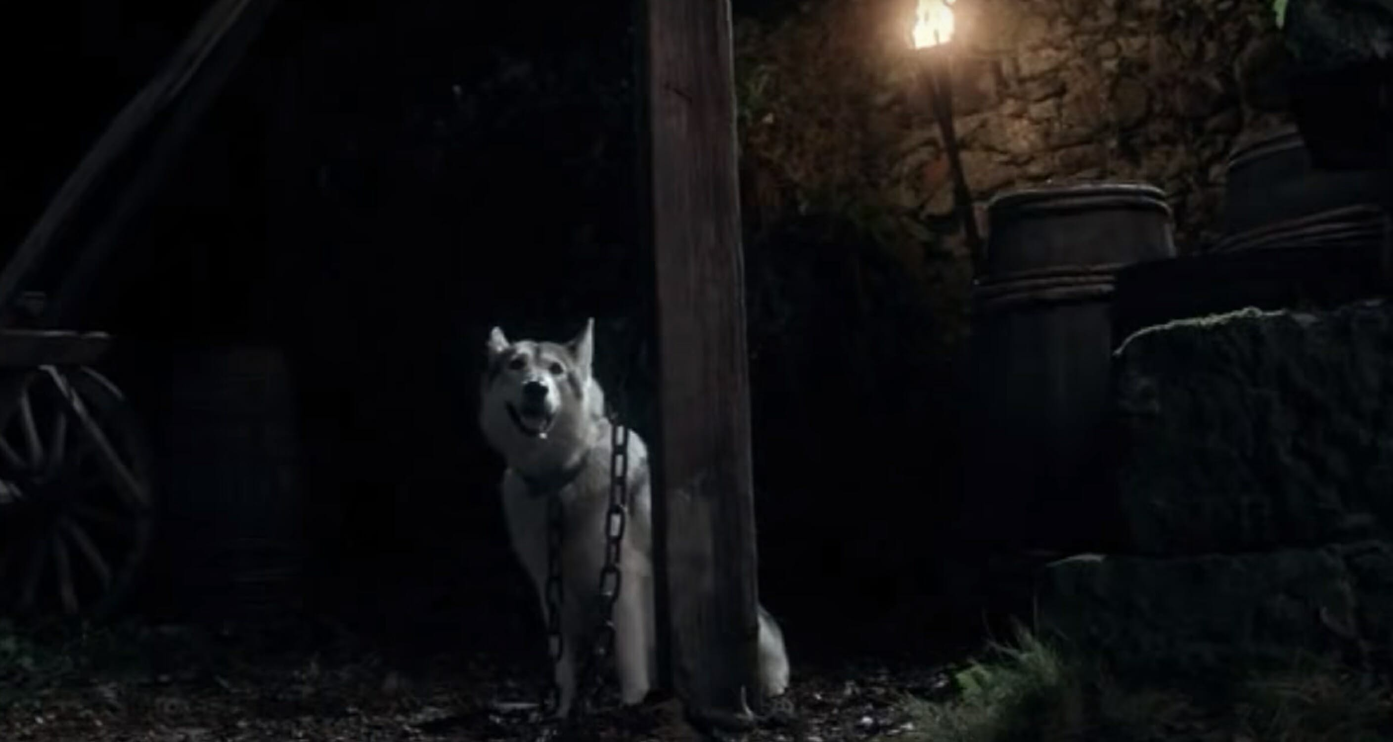 game of thrones direwolves lady