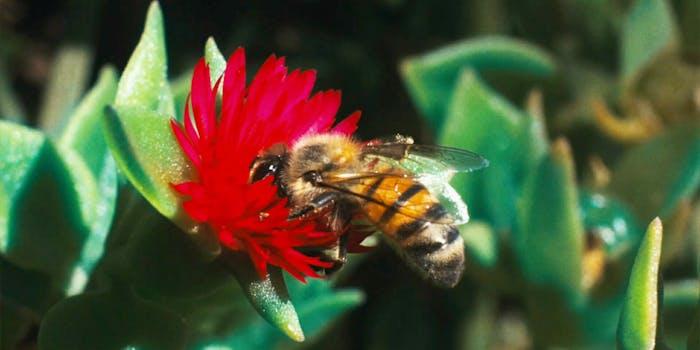 Pornhub bees beeexual
