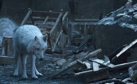 game of thrones_ghost