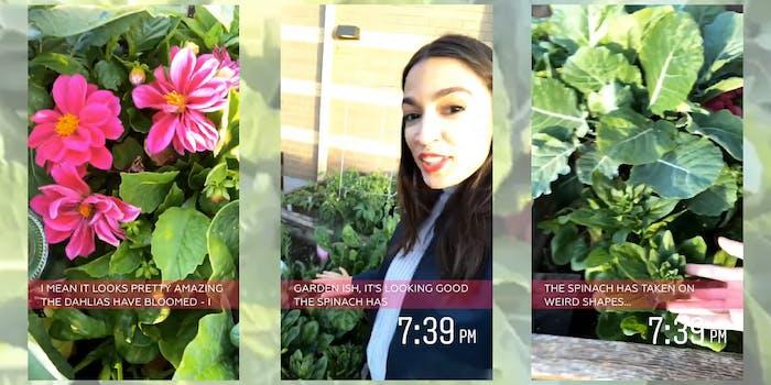 alexandria ocasio cortez instagram garden