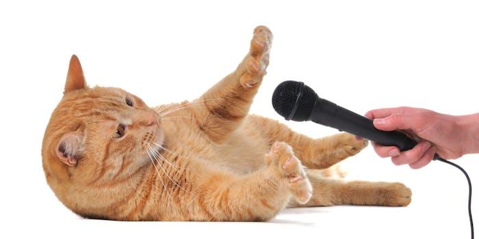 cat microphone