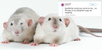 gay rat wedding