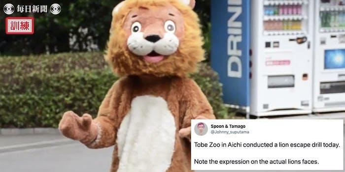 zoo-escaped-lion-drill