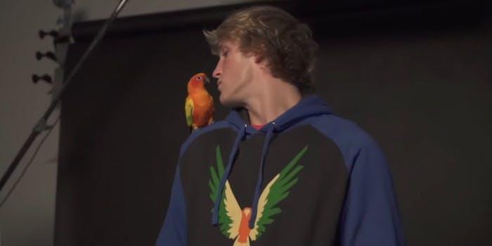 logan-paul-maverick-parrot-eaten