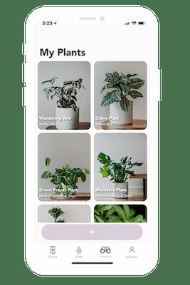 florish - houseplants