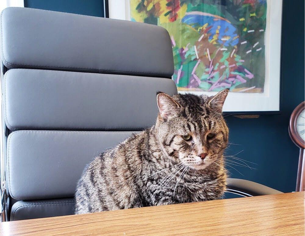 mr b business cat