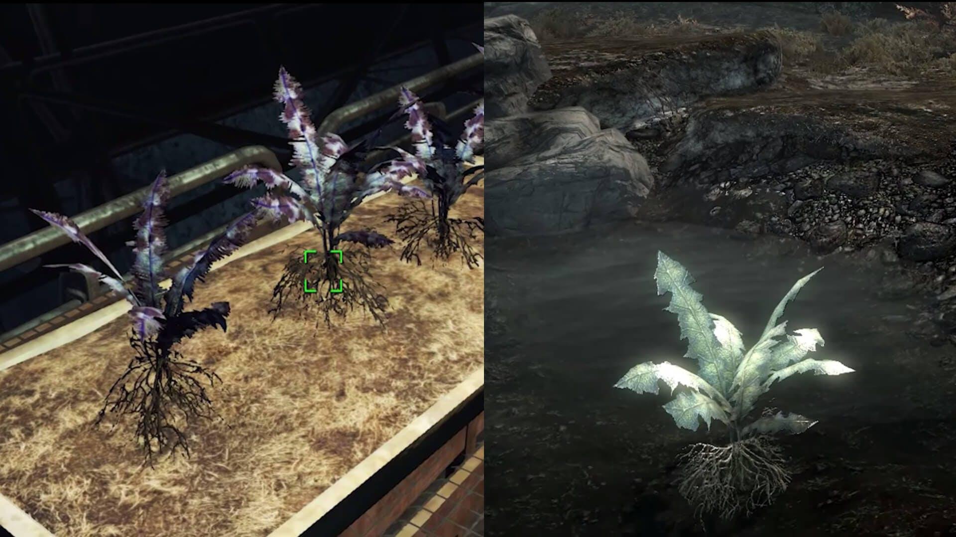 Nirnroot - Fallout 4 secrets