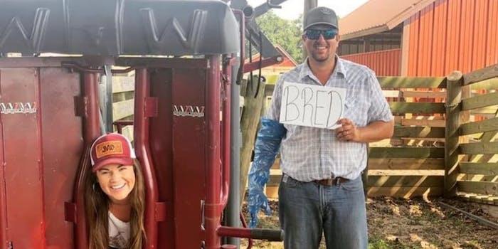 livestock-bred-pregnancy-announcement