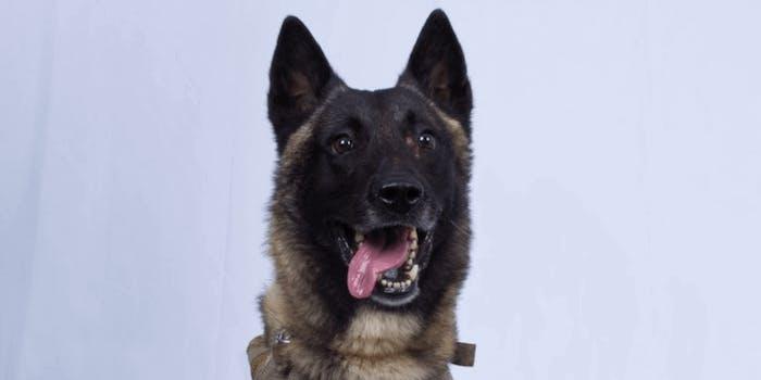 al-baghdadi-raid-conan-the-dog-gender