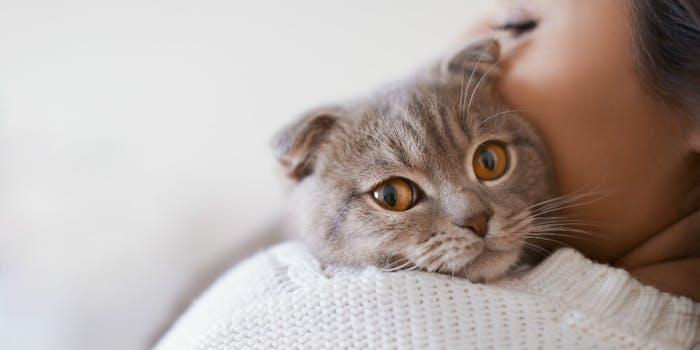 aita-domestic-abuse-cat-impersonations