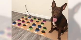 dog-speaks-custom-soundboard