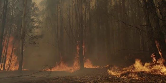 Australian fires dildo fundraiser