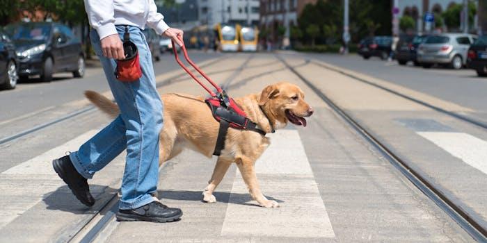 disability uber lyft service dog
