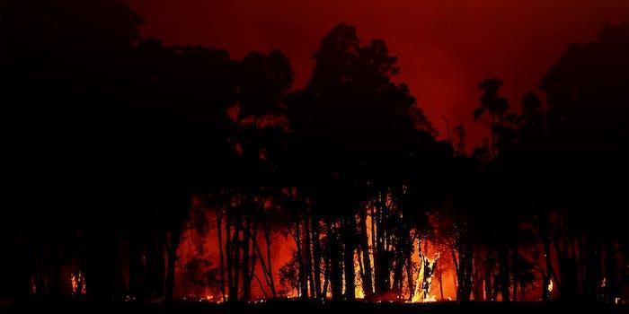 australia arson