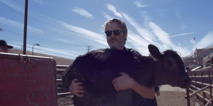 Joaquin Phoenix - calf