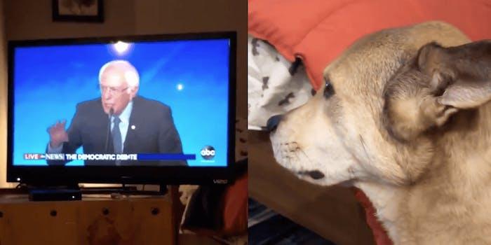 A dog named Tuna intensely watches Sen. Bernie Sanders (I-Vt.)