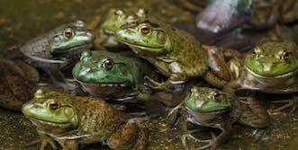 reddit relationships frogs