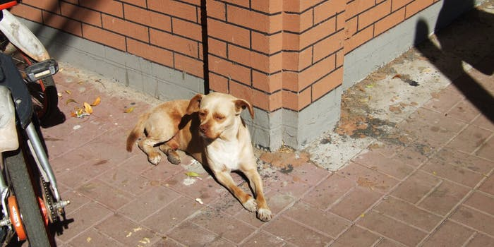 stray dogs killed coronavirus