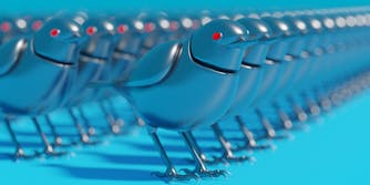 twitter bot birds