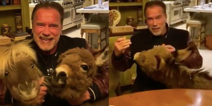 Arnold Schwarzenegger with his ponies during coronavirus video