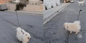 Screenshots show the dog running with a drone attached