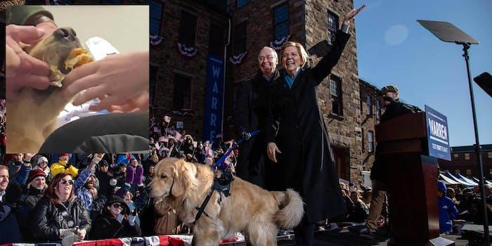Elizabeth Warren and her dog Bailey
