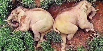 drunk elephants debunker