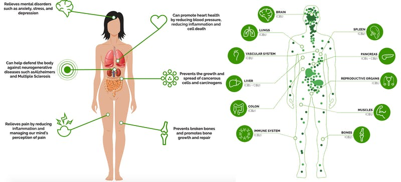Visual chart showing the findings of a study about the best CBD oil for sleep