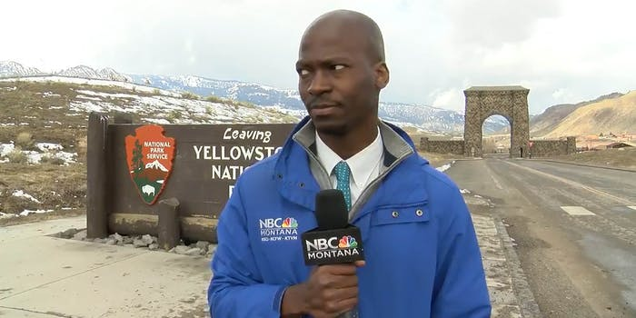 reporter eyeing a herd of bison at yellowstone national park