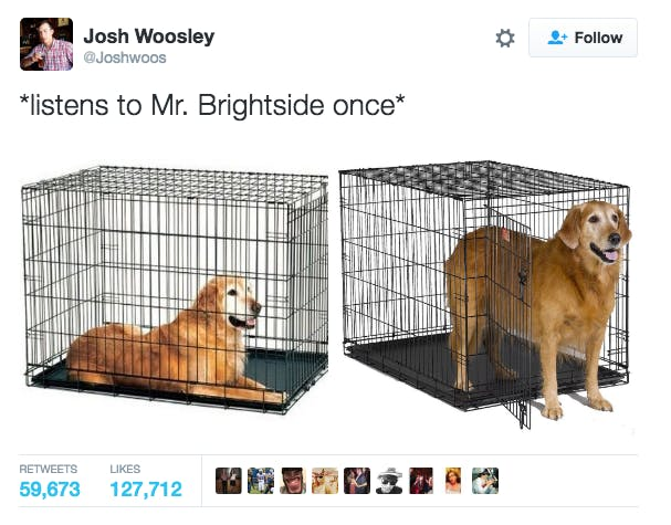 Emo meme showing a dog coming out of his cage after listening to Mr Brightside