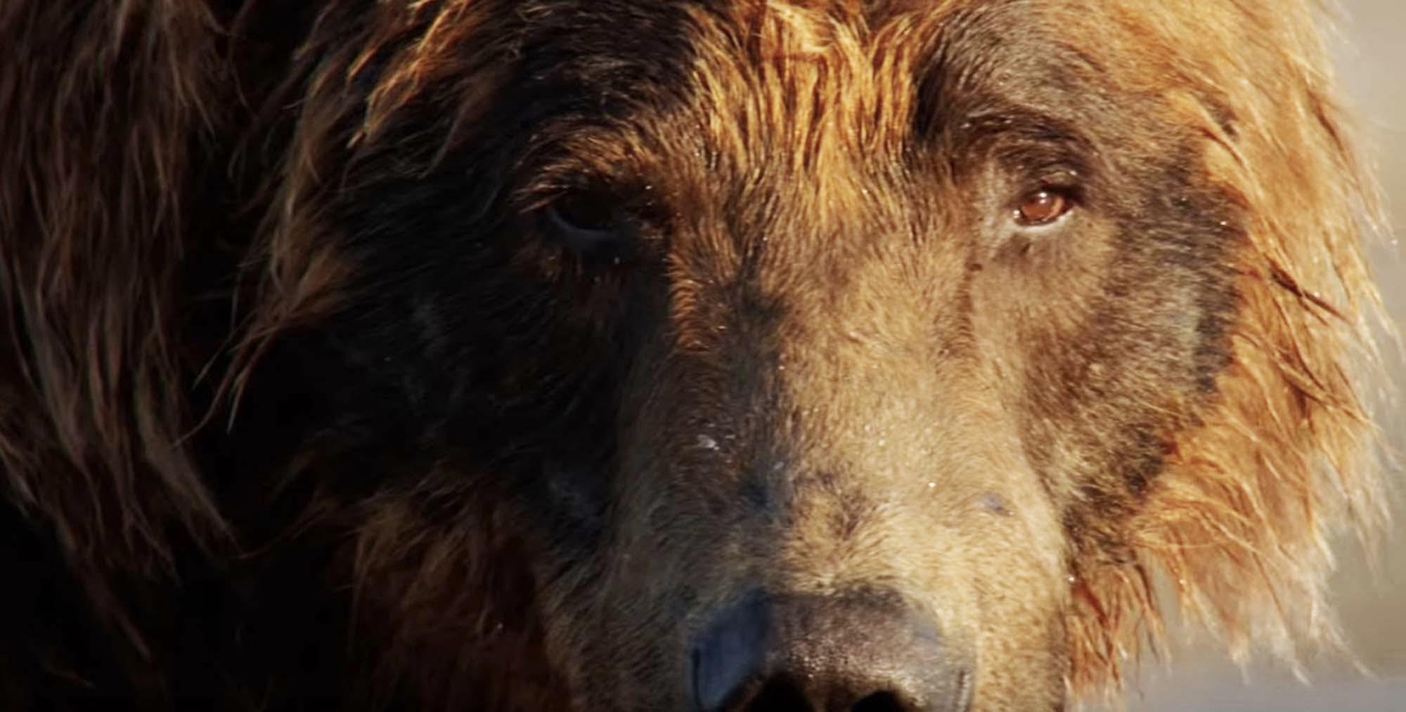 disney plus bears