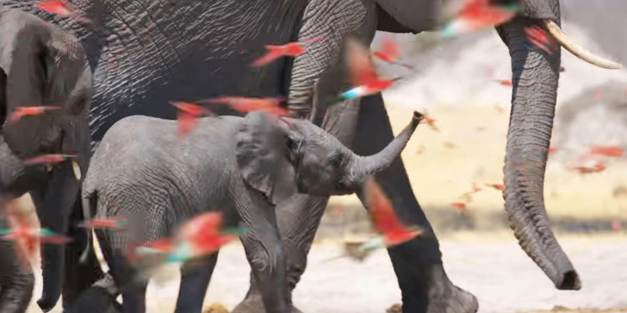 disney plus elephant