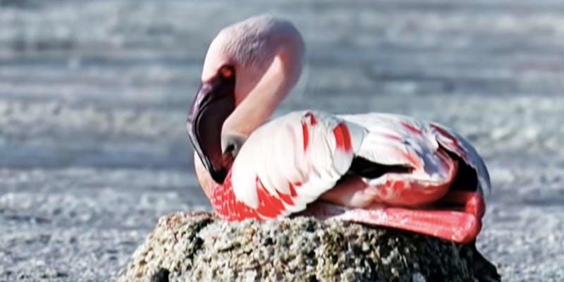 disney plus mystery of the flamingos
