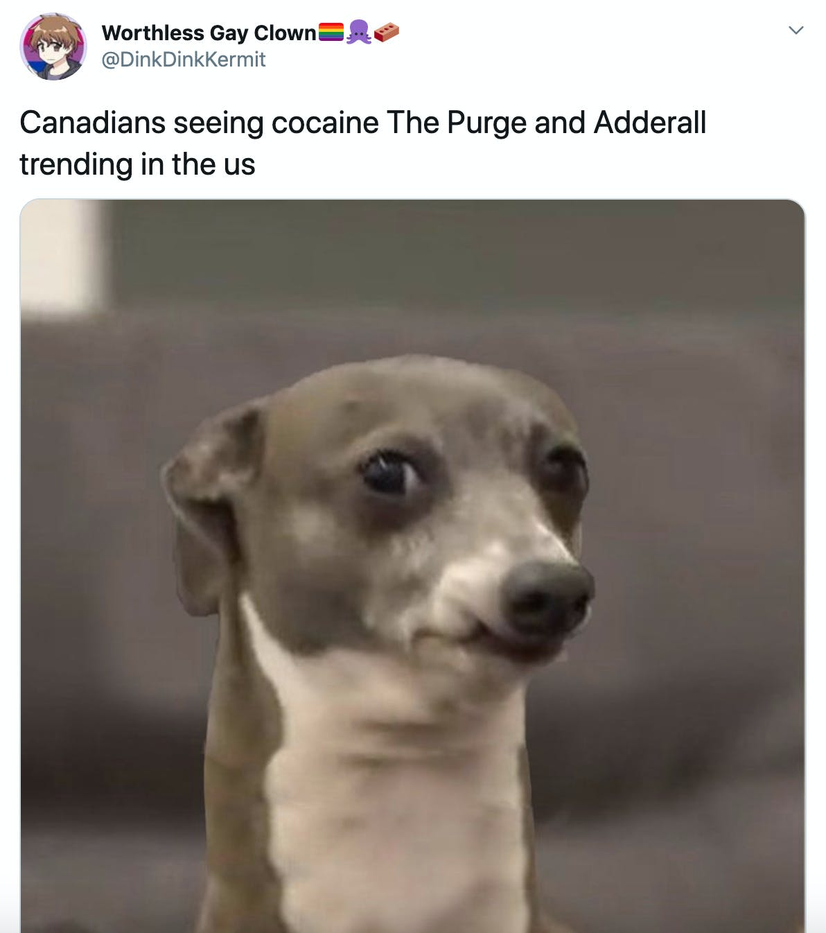 """Canadians seeing cocaine The Purge and Adderall trending in the us"" picture of a grey and white dog looking suspicious"