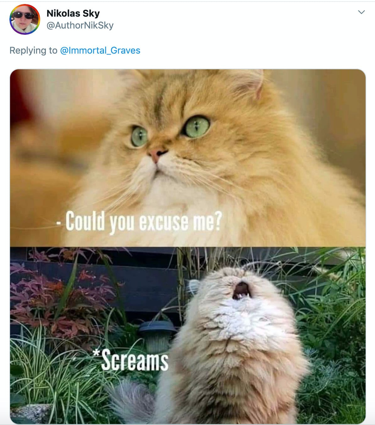 """Two pictures of a fluffy orange cat, the first has """"could you please excuse me?"""" written on it and the second features it screaming at the sky"""