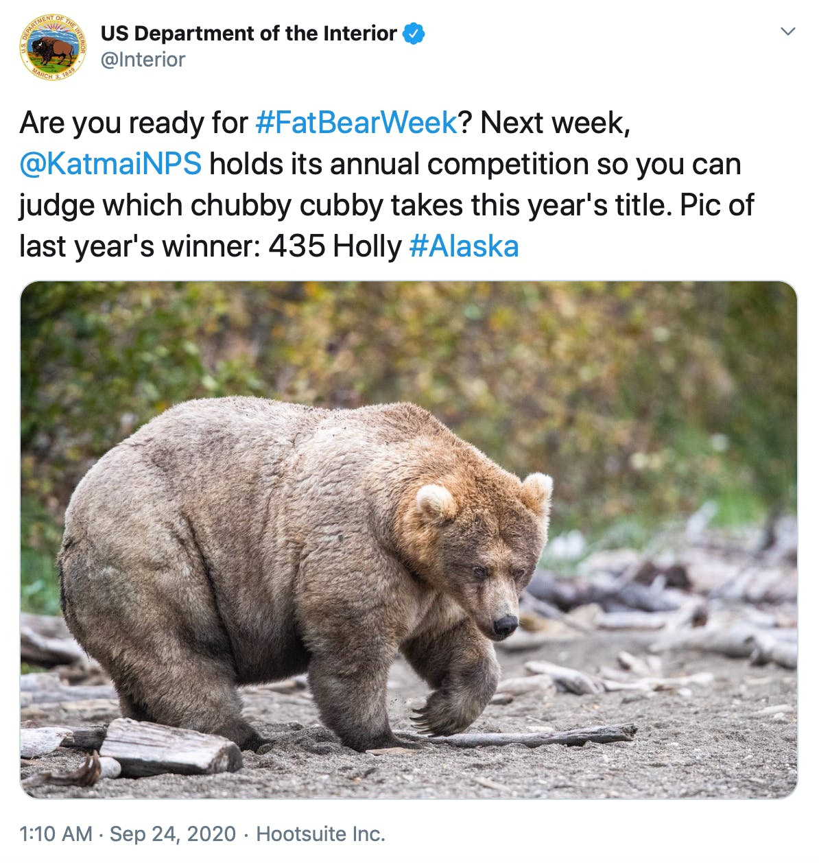 """""""Are you ready for #FatBearWeek? Next week,  @KatmaiNPS  holds its annual competition so you can judge which chubby cubby takes this year's title. Pic of last year's winner: 435 Holly #Alaska"""" photograph of a very fat brown bear"""