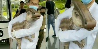 cloned baby dinosaur video