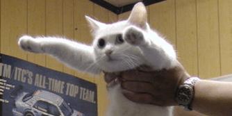 A long cat known as longcat