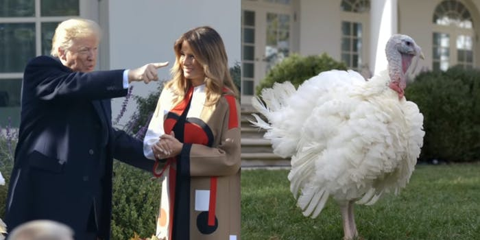 Trump Turkey Pardon Recount Viral Tweet