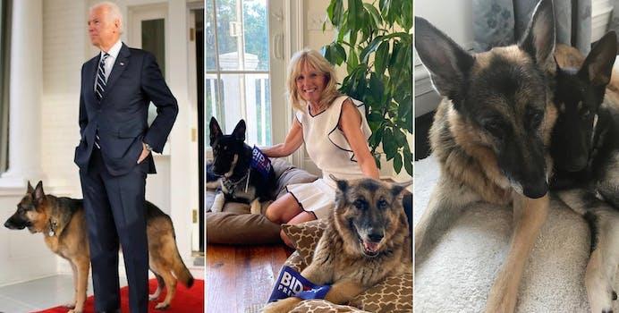 Joe Biden dogs Twitter