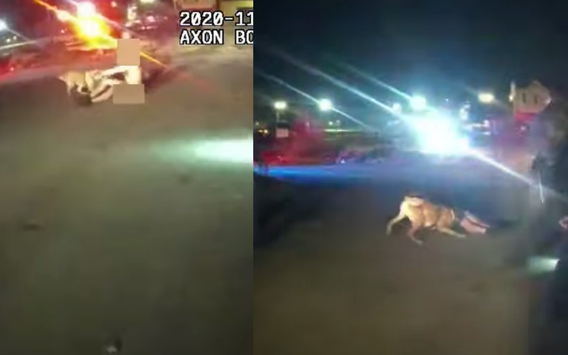 Bodycam footage shows the K9 pulling at Washington's leg