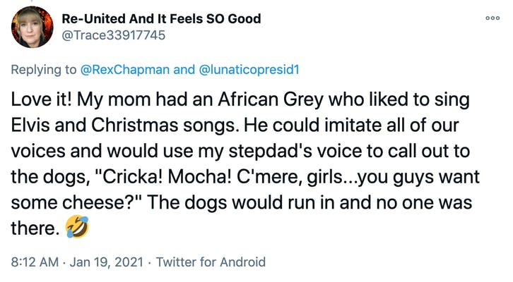 """Love it! My mom had an African Grey who liked to sing Elvis and Christmas songs. He could imitate all of our voices and would use my stepdad's voice to call out to the dogs, """"Cricka! Mocha! C'mere, girls...you guys want some cheese?"""" The dogs would run in and no one was there. 🤣"""
