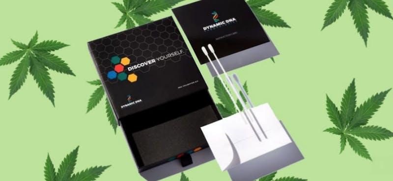 cannabis dna test