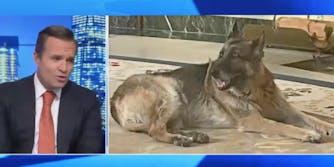 A Newsmax host attacking Joe Biden's dog Champ
